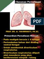embriologi susunan pernafasan