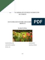 Referat TCH Academia de Studii Econimce