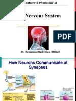 Nervous System lec 2) .ppt