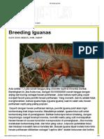 Breeding Iguanas