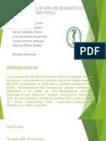 Diapositivas informe mosquito =(.pptx