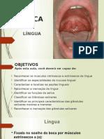 Lingua e Glandulas Salivares 2015