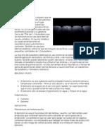 Informacion Adicional Productos y Subproductos