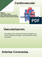 Vascularizacion de corazon y retorno venoso