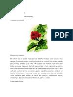 Hojas y Flores MEDICINALES