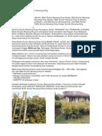 Durian Musang King Asli, Bibit Durian Musang King Harga, Bibit Durian Musan King Murah Bpk Faisal 082.137.433.114