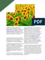 La Flor Es La Estructura Reproductiva Característica
