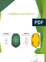 kelompok 7 (Carparace and Plastron).pptx