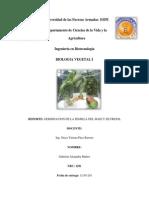 Reporte de La Germinacion de La Semilla de Frejol y Maiz