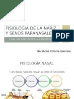 Fisiologia de La Nariz y Senos Paranasales