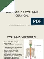 Anatomia de Columna Cervical