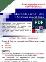 NECROSE E APOPTOSE e Acúmulos Intracelulares