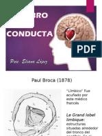 sistema limbico.ppt