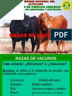 1 Razas de Animales Vacunos