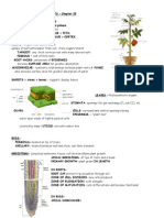 anatomy vascularplants 35 (1).doc