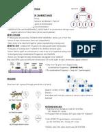 chromosome notes kelly.doc