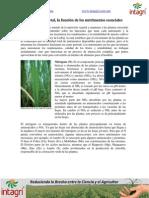 Nutricion Vegetal La Funcion de Los Nutrimentos Esenciales(1)