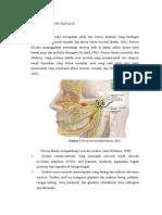 Anatomi Nervus Facialis