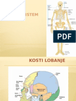 Skeletni Sistem