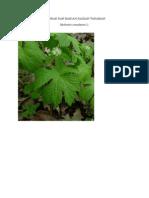 Gambar Dan Bagian Tumbuhan2
