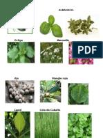 plantas meidcinales