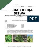 LKS-KUNCI keanekaragaman tumbuhan