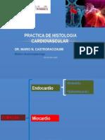 [Lab] Histologia - Cardiovascular