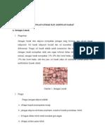 F05112019_Sri Kurniati_Jaringan Saraf Dan Lemak