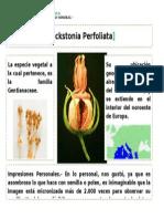 Ficha Online