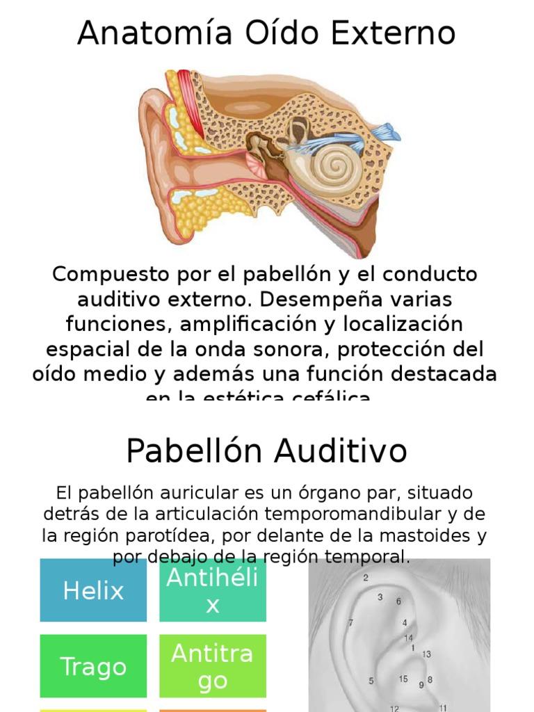 Excelente Anatomía Región Parótida Viñeta - Imágenes de Anatomía ...