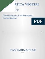 Casuarinaceae, Passifloraceae, Cucurbitaceae