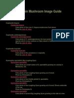 The Psilocybin Mushroom Image Guide