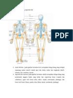 Tulang Axial Dan Tulang Appendicular