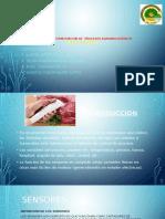 Exposicion SENSORES.pptx