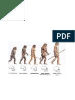 Somos La Cuspide Evolutiva