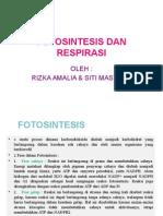 Fotosintesis Dan Respirasi