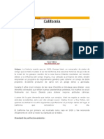 California conejos raza