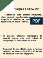 Cabaline Curs 4