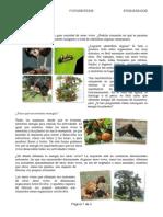 Material Fotosintesis 6tos Clase 1 PDF