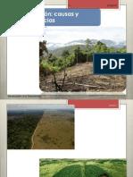 deforestacion 2014