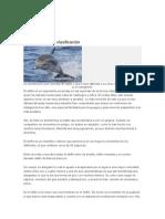 Características y Clasificación