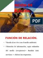 13. FUNCION DE RELACIÓN..pptx