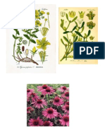 Referat Botanica