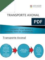 TRANSPORTE AXONAL