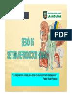 sistemareproductorhumano-110214235416-phpapp01.pdf