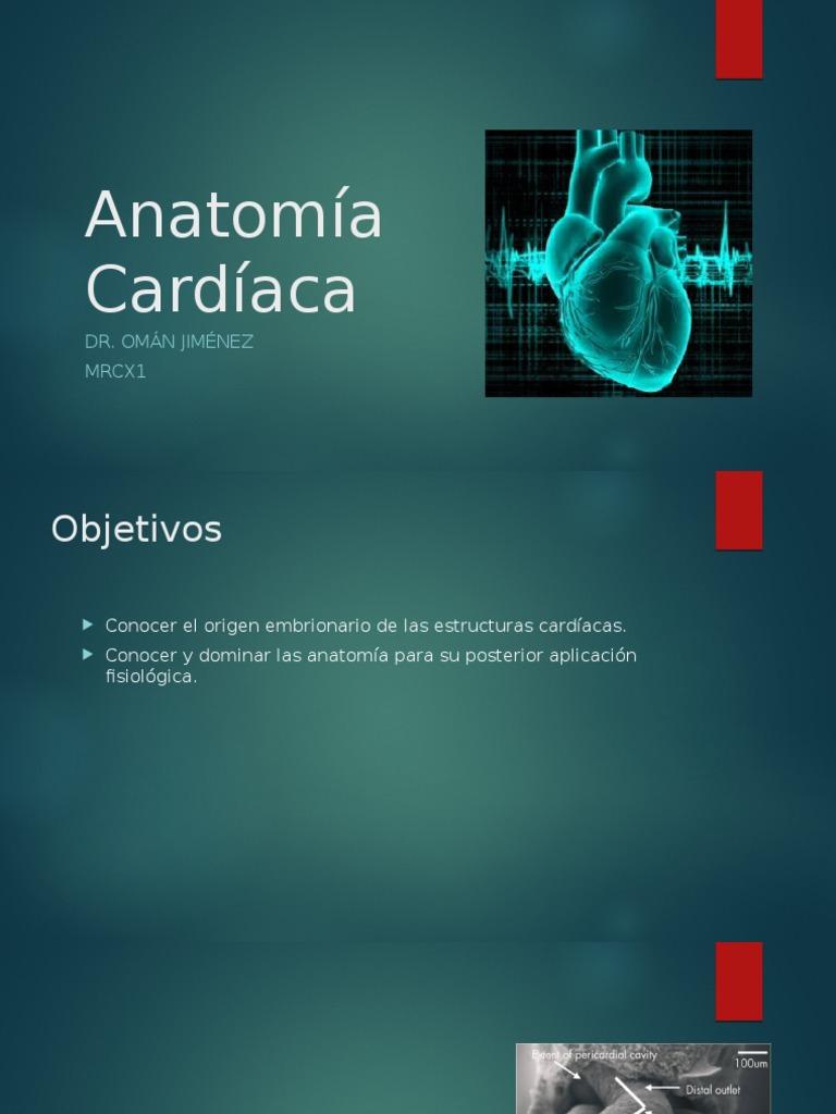 Anatomía Cardíaca heart