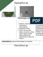 Atlas de Micologia