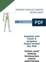 Anatomi Fisiologi Sistem Saraf