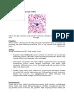 Askep Infeksi Virus Sitomegali.docx