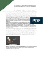 Helicobacter y Pseudomona